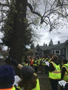 rose-city-park-tree-walk 33133338914 o